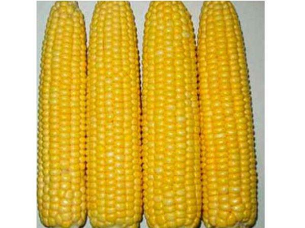 Quick-frozen yellow waxy corn sticks products,China Quick-frozen ...