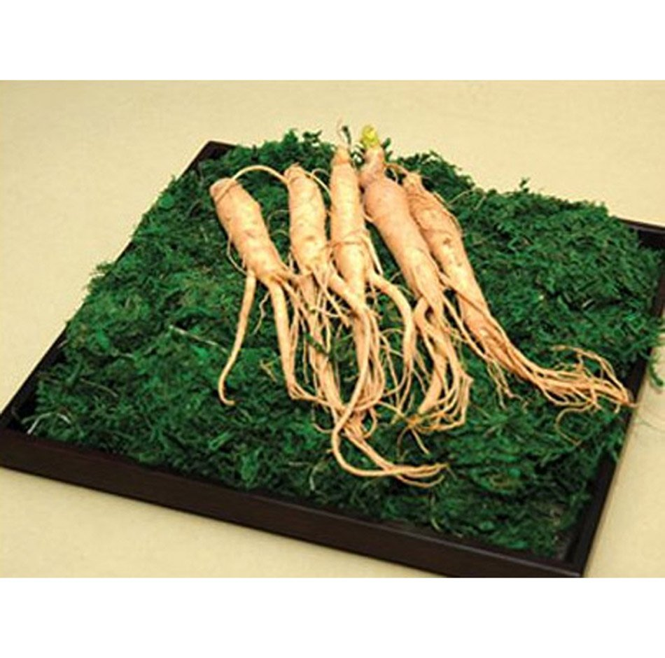 how to buy ginseng root