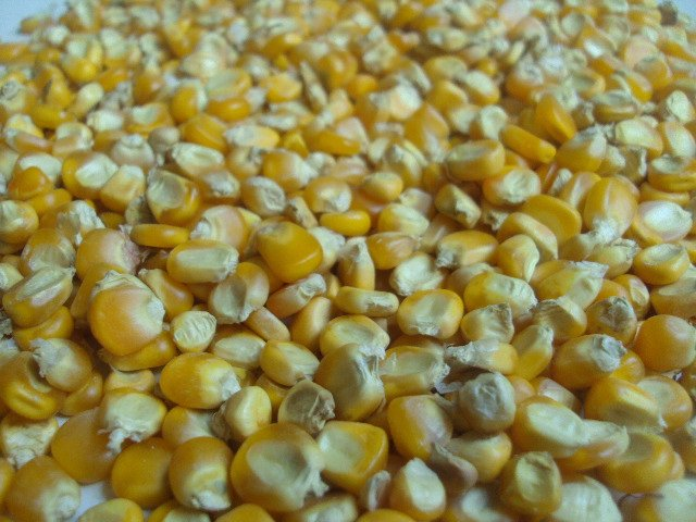 Yellow Maize(Animal Feed Grade)