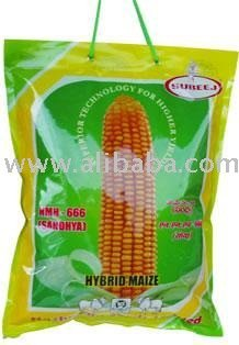 Single cross hybrid CORN seeds