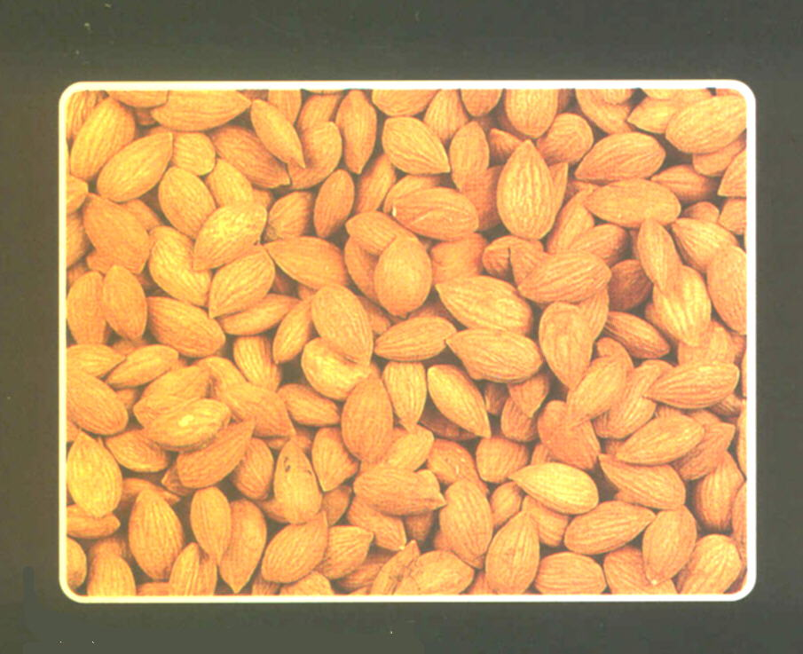 apricot kernels how to eat