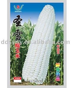 glutinous corn seed