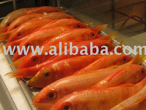 Frozen Red Mullet Fish for sale