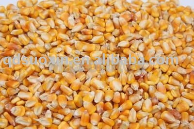 yellow corn for animal feed grade