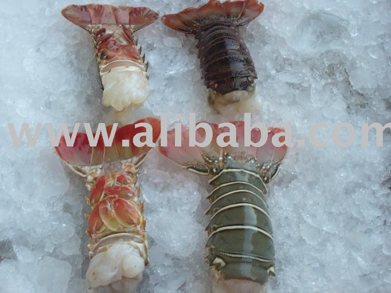 frozen lobster tails suppliers,exporters on 21food.com