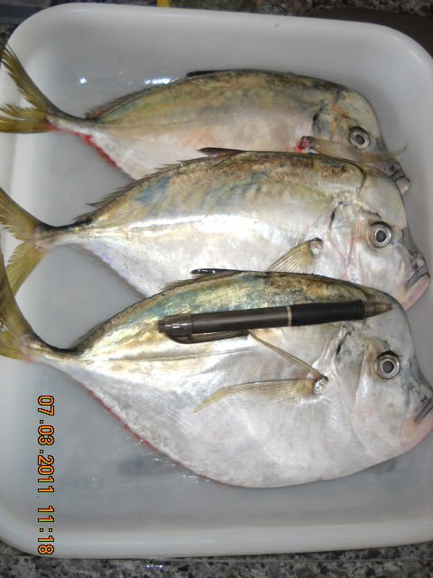 Moonfish products new zealand moonfish supplier for Opah fish price