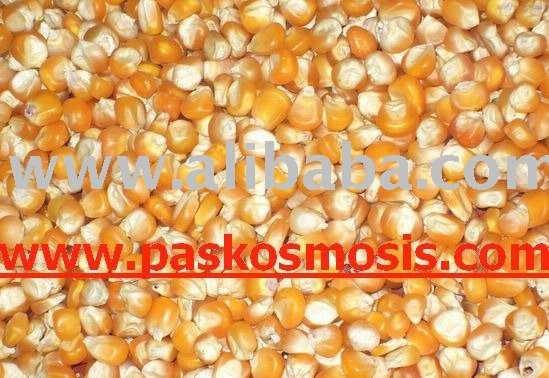 White and yellow maize products india white and yellow maize supplier