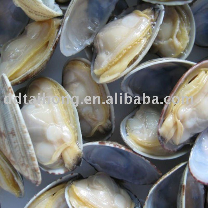 Frozen boiled short necked clam Aquatic Product