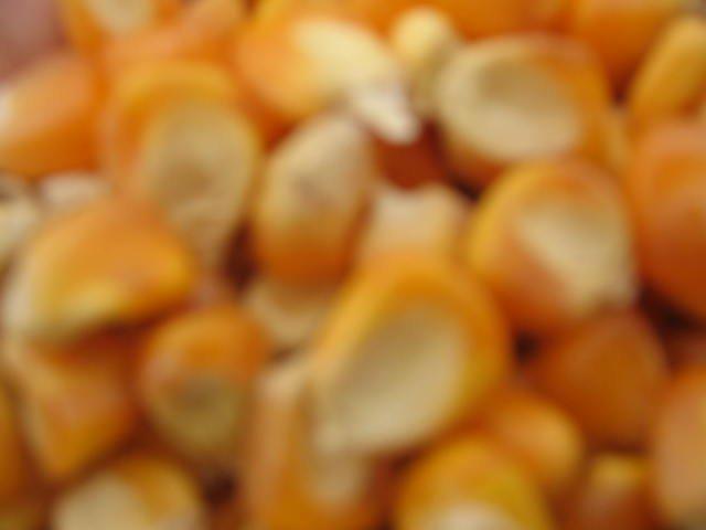 Corn Feed Grade