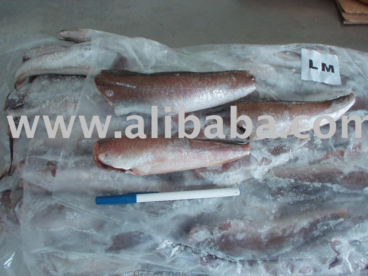 Croaker fish fillet - photo#28