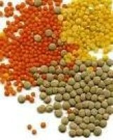 all types of lentils For Sale