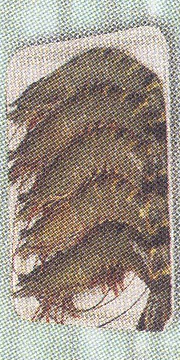 Head-on Shell-on, Black Tiger Shrimps (Sea Water)