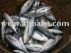 Horse Mackerel and red mullet for sale