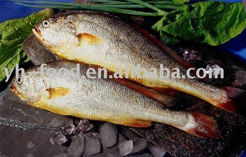 yellow croaker fresh  fish   market