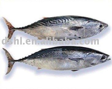 how to cook bonita fish