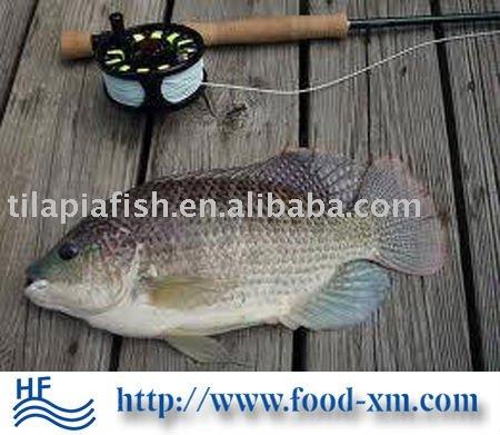 frozen   fish   tilapia
