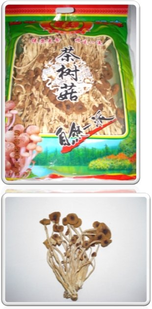 Dried Tea Tree Mushroom