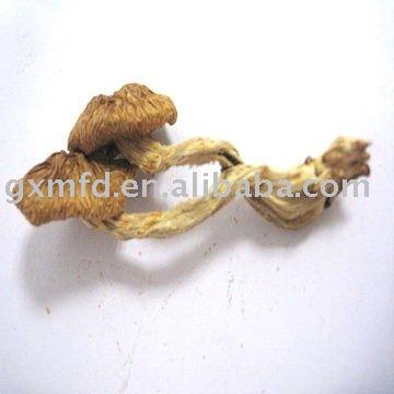 Dried Mushroom or canned Mushroom
