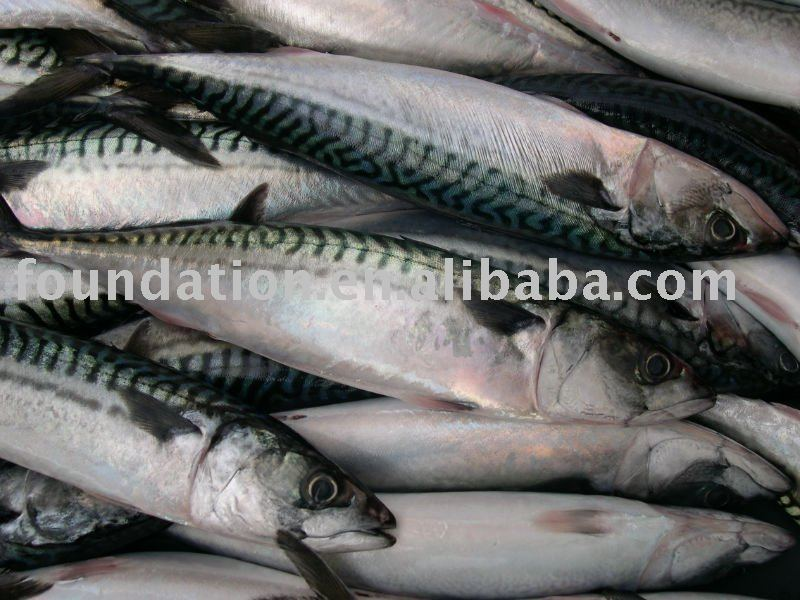 Whole pacific mackerel fish products china whole pacific for Whole foods fish on sale this week