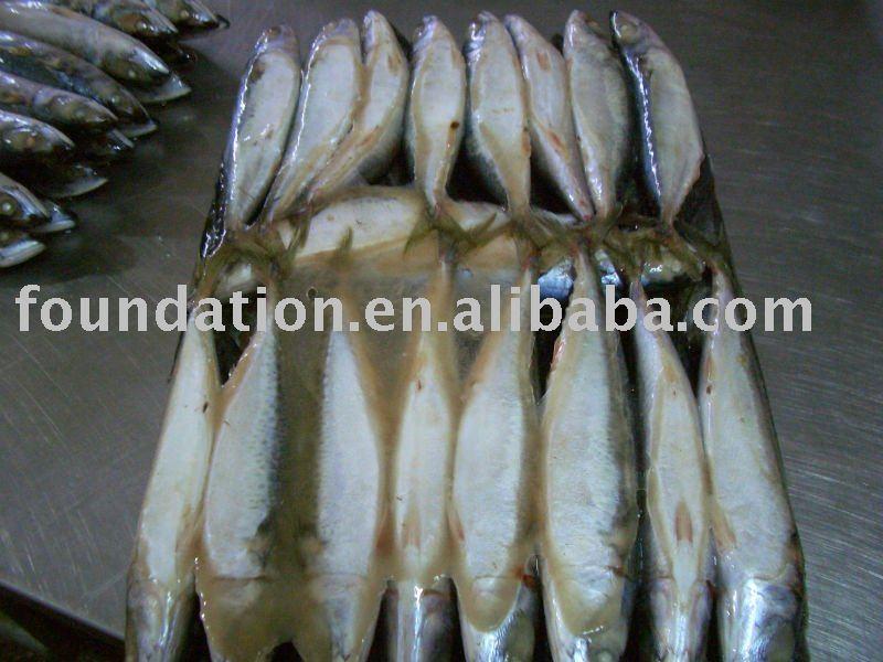 Pacific Mackerel Scober Scombrus