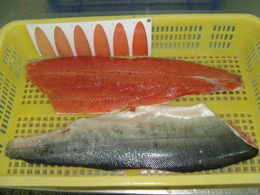 how to cook a salmon fillet frozen