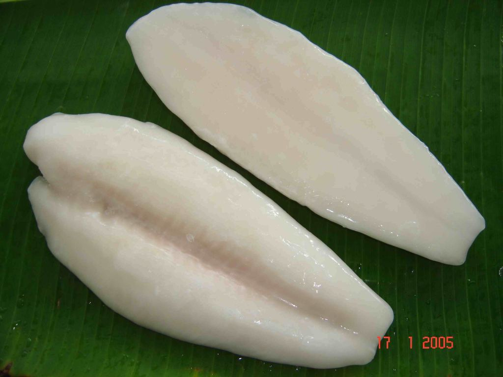 Frozen white pangasius fillet products vietnam frozen for Whiting fish fillet