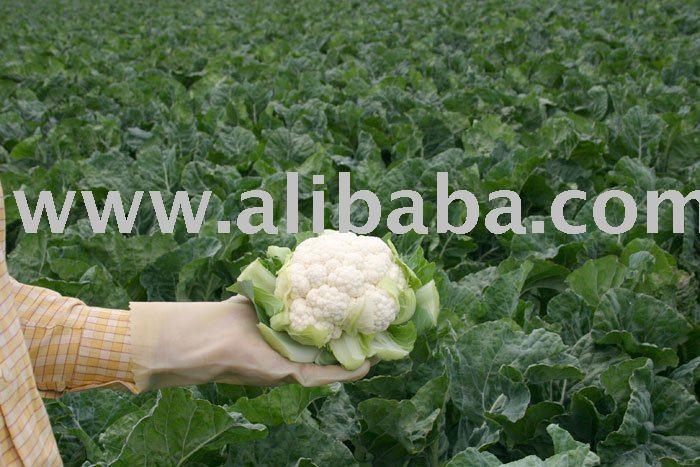 Fresh Vegetable Cauliflower