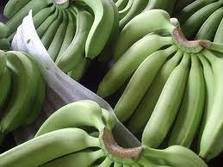 fresh cavendish bananas