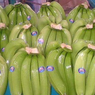 Fresh Cavendish banana for sale
