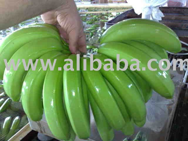 FRESH CHIQUITA CAVENDISH BANANA READY FOR SHIPPING