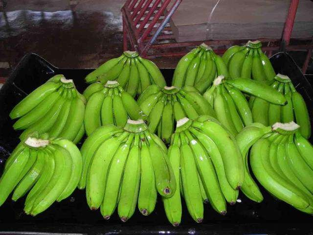 WE SELL CAVENDISH BANANAS