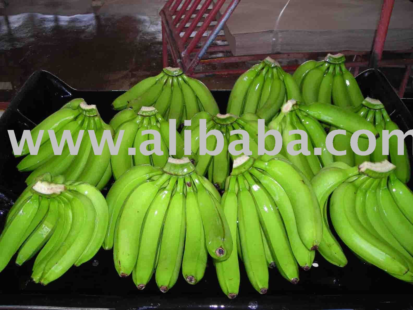 FRESH CAVENDISH BANANAS FOR SALE