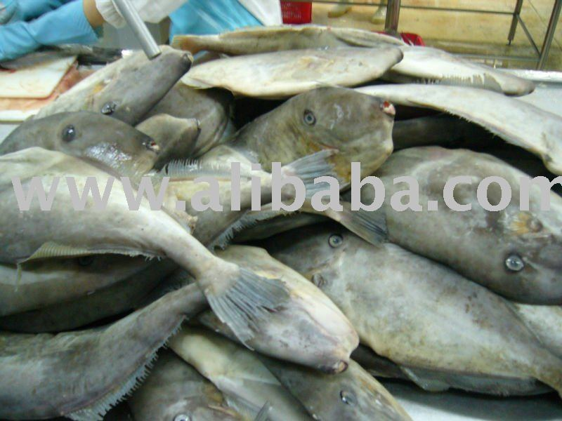 King fish steak skin on iqf products vietnam king fish for Leather jacket fish