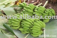 Fresh Philippine Cavendish Banana