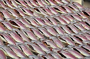 dried ginto ginto fish