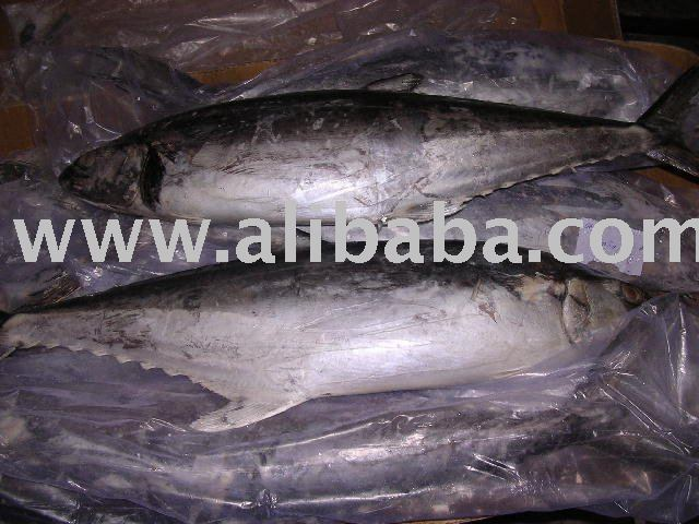 how to cook canned tuna fish in indian style