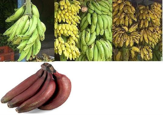 fresh banana Cavendish Banana