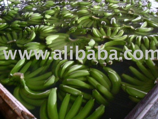 Philippines Fresh Green Cavendish Banana