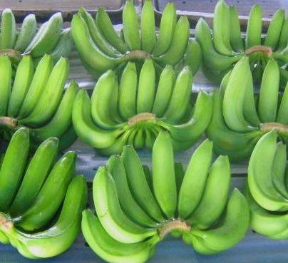 Fresh Green Cavendish Bananas For Sell