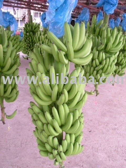 Philippine Sweet Cavendish Bananas