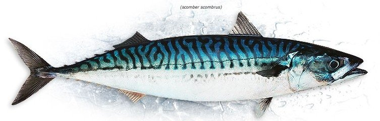 Land frozen MACKEREL