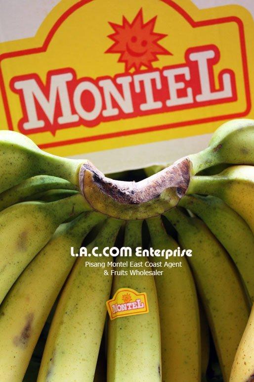 Pisang Montel Banana
