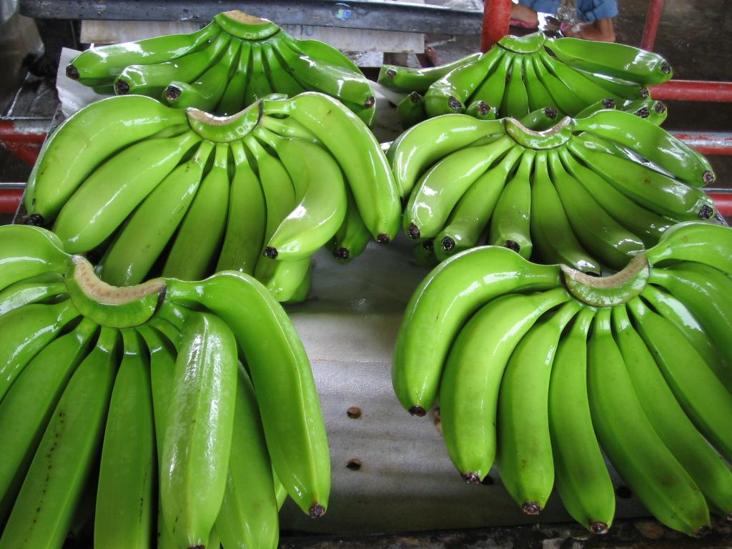 Tropical Sweet Bananas