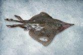 Raya Fish