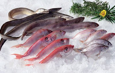Fish products for H m fish count