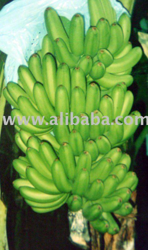 Naturally grown sweet Philippine banana