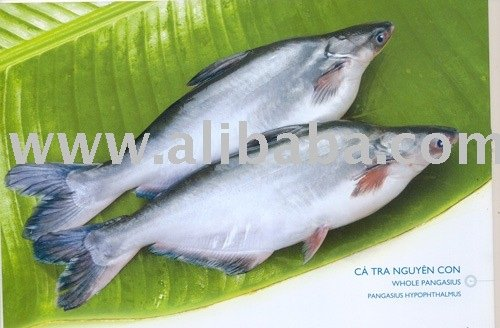 Basa products vietnam basa supplier for What kind of fish is basa