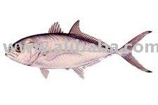 Blue runner fish products united states blue runner fish for Blue runner fish