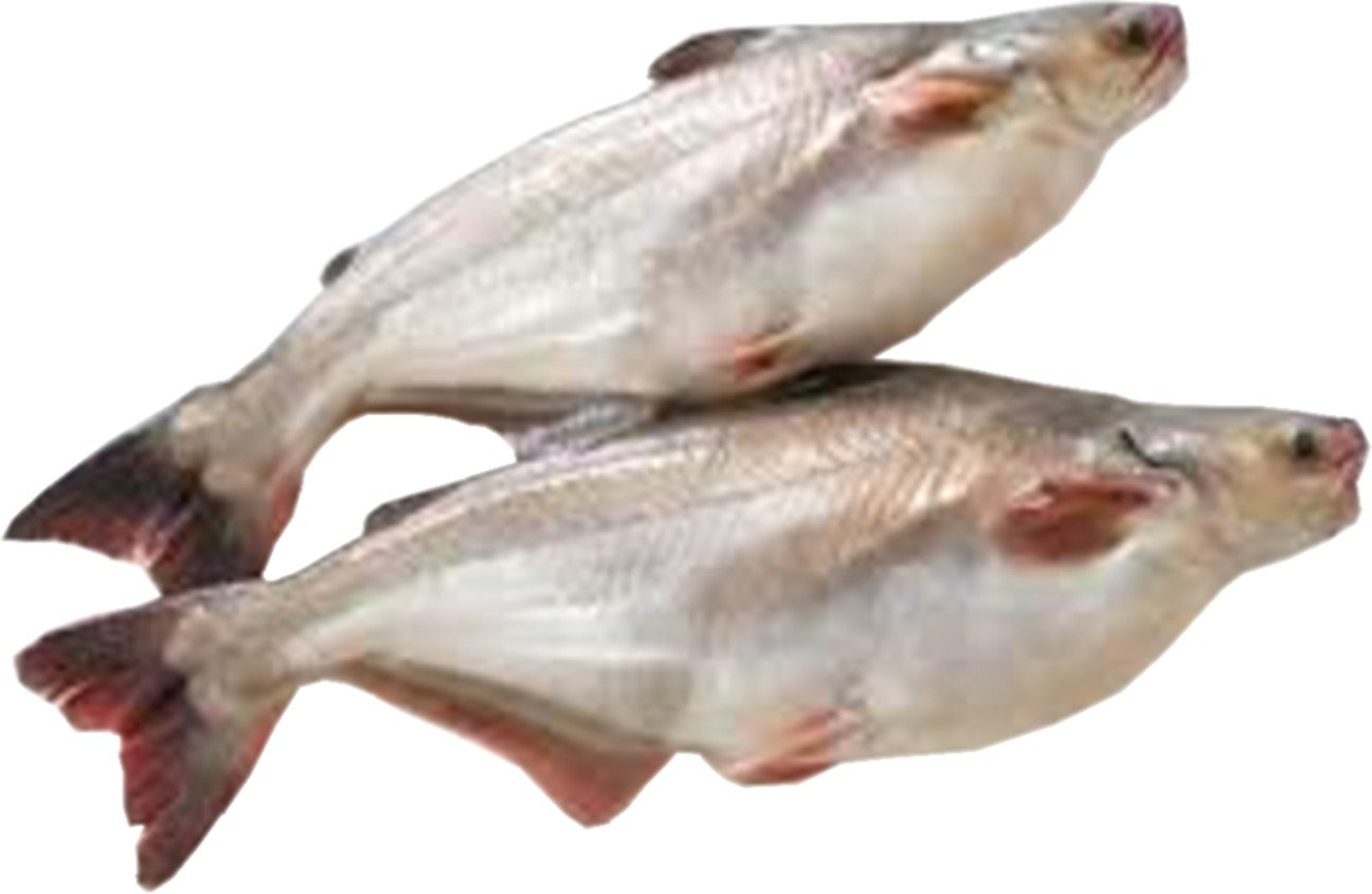 Pangasius / Cream Dory Fish