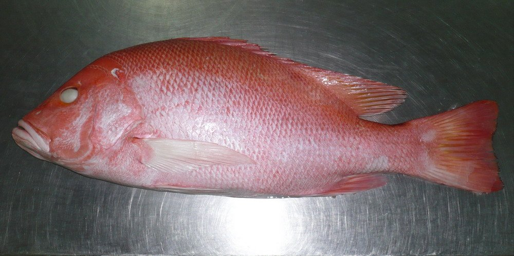 Red Snapper / Scarlet snapper